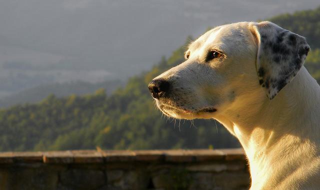 Chronic UTI in Dogs